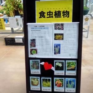 花テラスの温室でみた食虫植物 オオーw(*゚o゚*)w