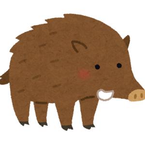 彡(^)(^)「猪が日本語しゃべる訳ねーだろ」