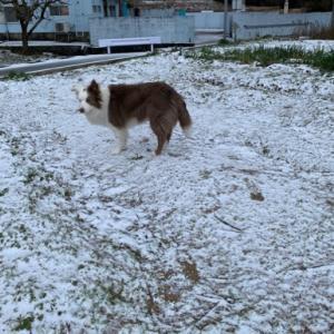 やっと冬らしくなった!?(^▽^;)