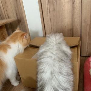 箱の中に美味しい物あるの(・・?
