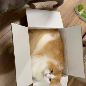 箱があれば(^▽^;)