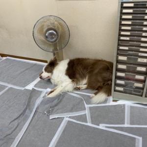 暑いから自分で扇風機つけた(^▽^;)