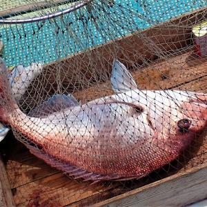 一つテンヤ釣法で真鯛釣りに初挑戦!!