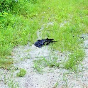 有害鳥獣捕獲(有害駆除)の始まり