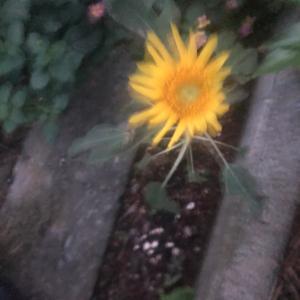 種から芽が出て花が咲きました