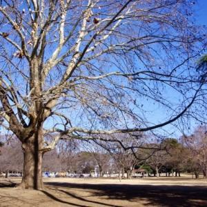 冬晴れの公園