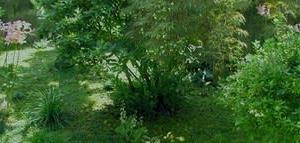 狭庭に長梅雨