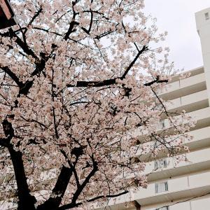 桜からの…