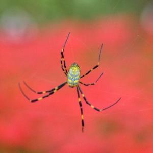 女郎蜘蛛の災難