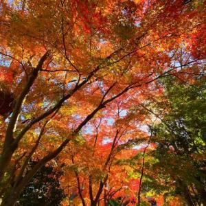 小仏城山紀行その1 紅葉とリハビリ