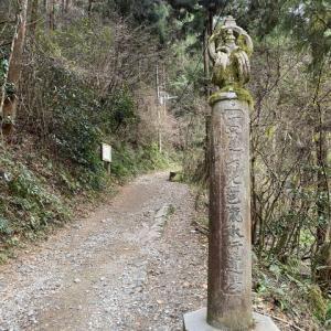 高尾山紀行その1 シモバシラ見に行ってみた