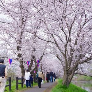 桜2016 -つくばみらい-