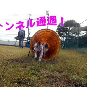 ドッグランM'sで練習〜!