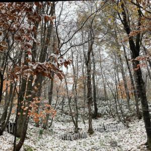 初雪です☃️