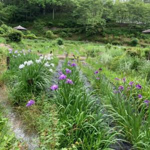 山の中の菖蒲園
