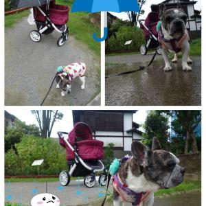 時々雨んぽ…でもいい散歩♪