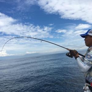 三保沖はソルトルアー日和でした 8、投げても釣れます