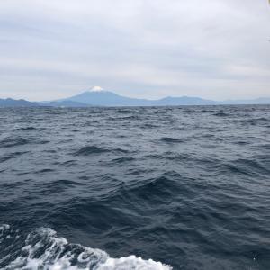 三保沖で今日はタイラバです 4、本命来た〜。