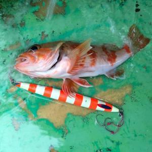 波崎沖、雨中の中深海ジギング 3、なんとかユメカサゴ