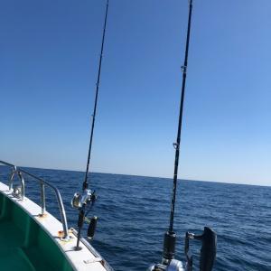 真鶴沖でリハビリジギング 3、タチウオ?
