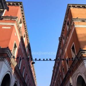 【alex的⭐︎コロナ禍生活】ココもアソコも鳩も?!ソーシャル・ディスタンス@ヴェネツィア