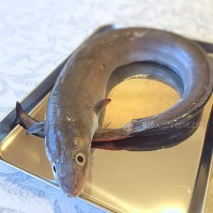 ヴェネツィア人に「超不人気」な魚 de 激ウマ米粉フライ♪