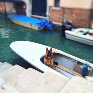 お馬鹿さんなの?! 何故リードをしないのか...謎!! @ヴェネツィア
