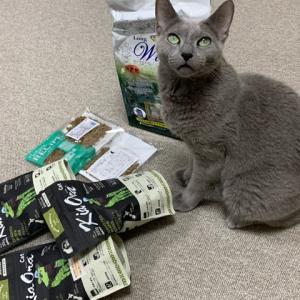 ご飯、猫あるあるにょ。
