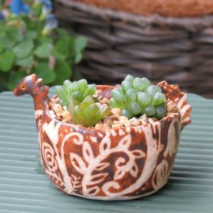 動物鉢にハオルチア、陶のこびと