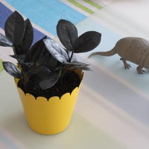 黒い葉のザミオクルカス「レイヴン」