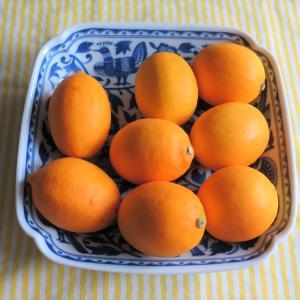 オレンジ色のレモン メイヤーレモン