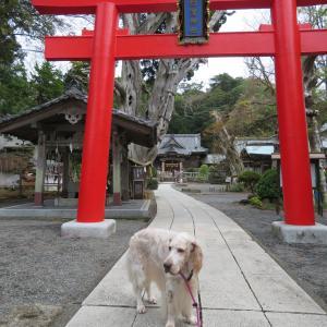 伊豆下田 白浜神社