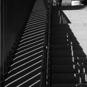 日枝神社 光と影