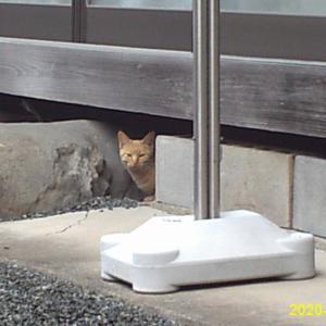 妻の実家の縁の下の居候猫