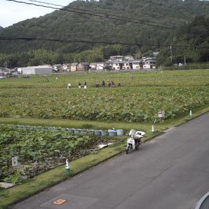 姫路市安富町のヤマサ蒲鉾蓮池