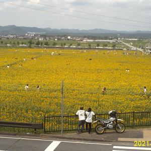 小野市ひまわり公園が満開で行ってきた