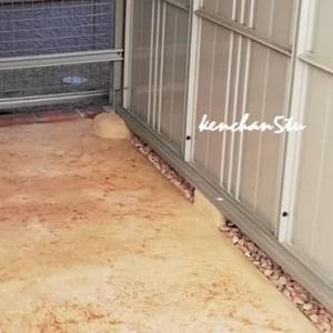【Before & After 】土間コンクリートをカラーでおしゃれに♪