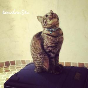 【=^_^=猫】マイカ♪どこへ行く?