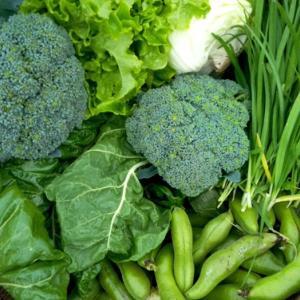 採れたて野菜♡腸は脳みそよりエライ