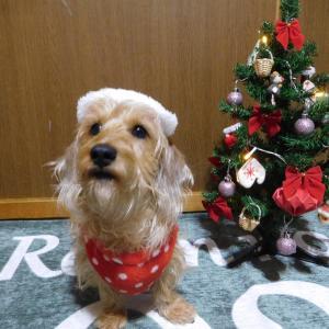 Merry Christmas♪♪