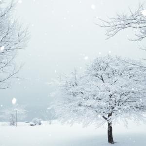 寒い日はどこに行ってもガラガラ
