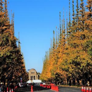 東京散歩、、神宮外苑の銀杏並木