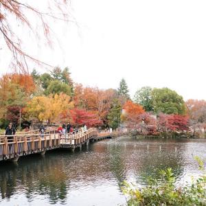 井の頭公園、、見納めの紅葉