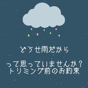 どうせ雨だから?!