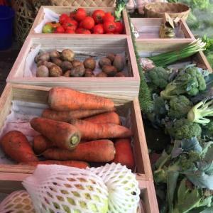 今日も市場で新鮮な野菜を買いました。