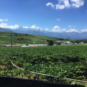 埔里のパッションフルーツ収穫量は、全台湾の90%を占めています。