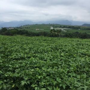 パッションフルーツの収穫量は、台湾全土の90%以上!