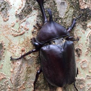 虫たち(甲虫)の季節が始まりました!