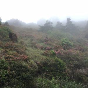 高山に『山ツツジ』を見に行って来ました。