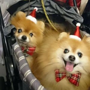 一足早い、ぷちクリスマス会。
